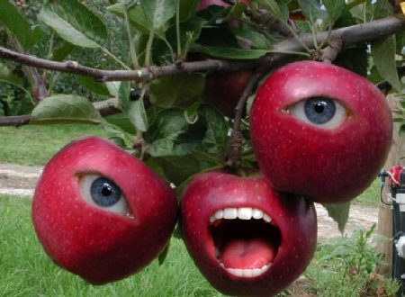 [FOTORITOCCO] – Le mele inquietanti