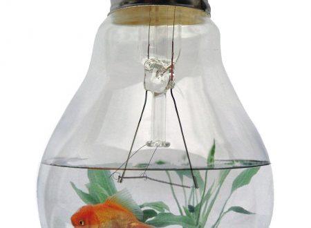 [FOTORITOCCO] – Pesce rosso