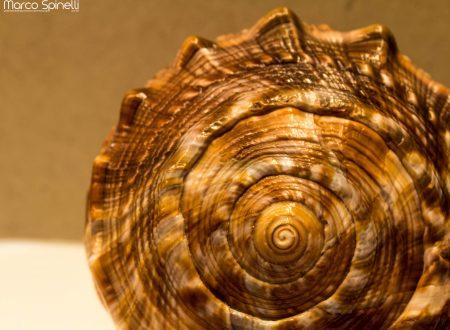 [FOTOGRAFIA] – Like a Shell